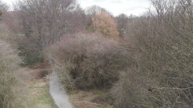 Aerial footage through the woods in Autumn video