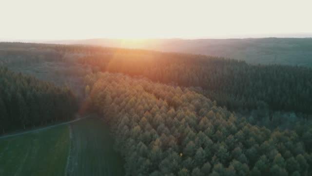 aerial: forest with colorful trees in belgian ardennes valley with nice sunlight - belgio video stock e b–roll