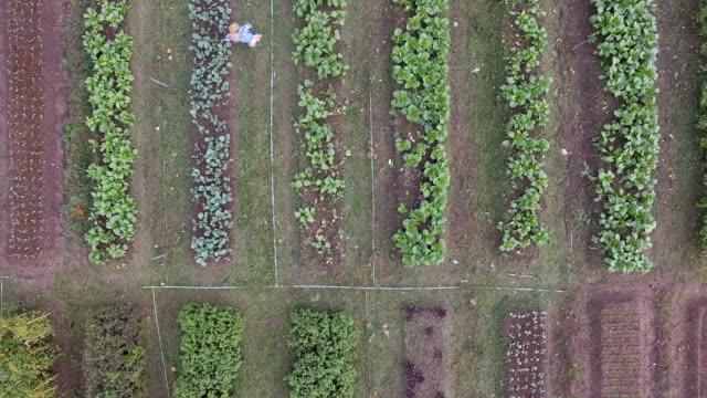 antenne - frisches bio-gemüse in hof - urban gardening stock-videos und b-roll-filmmaterial