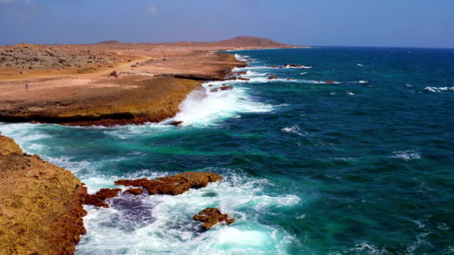 aerial from the wild east coast on aruba island in the caribbean sea - antenna parte del corpo animale video stock e b–roll