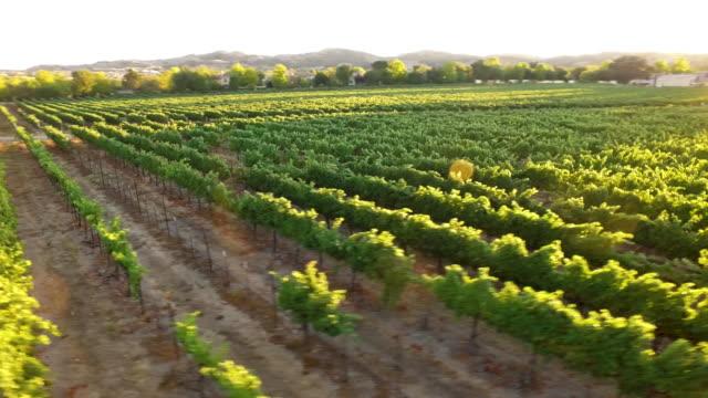 vidéos et rushes de antenne - vignoble magnifique coucher de soleil - californie du sud