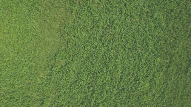 Aerial Green Field video