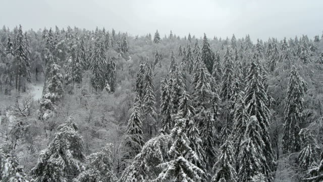 Aerial HD: Front view over wild snowy forest video