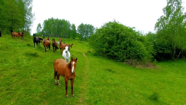 stockvideo's en b-roll-footage met antenne: kudde paarden op de weide - vachtpatroon