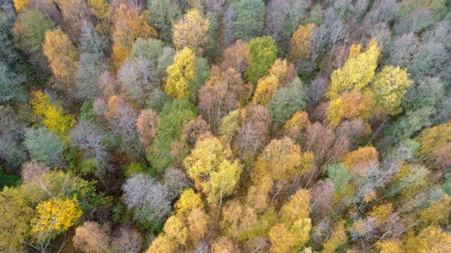aerial landskap av en skog i sverige - pine forest sweden bildbanksvideor och videomaterial från bakom kulisserna