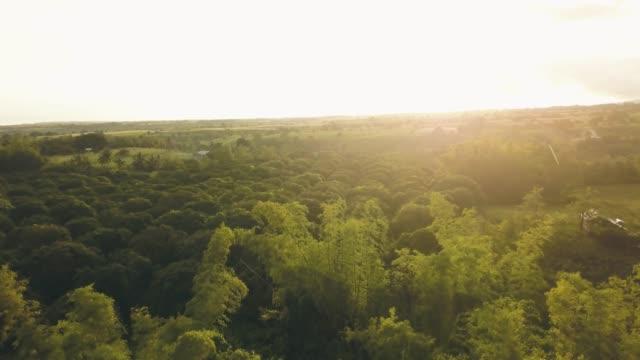 antenn landskap tropiskt regn över mango plantage i asiatisk by. drone flyger medan regn över frukt trädgård och jordbruks området i asiatisk landsbygd. solsken bakgrund. - fruktträdgård bildbanksvideor och videomaterial från bakom kulisserna