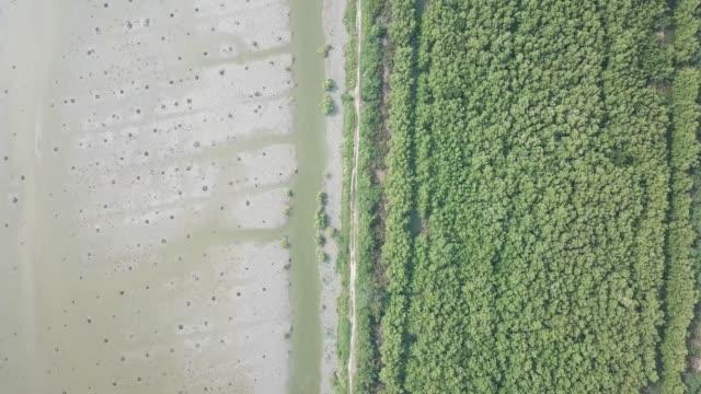 aerial look down dead palm trees and mangrove trees - ekoturystyka filmów i materiałów b-roll