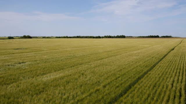 Aerial of a prairie wheat field 2 video