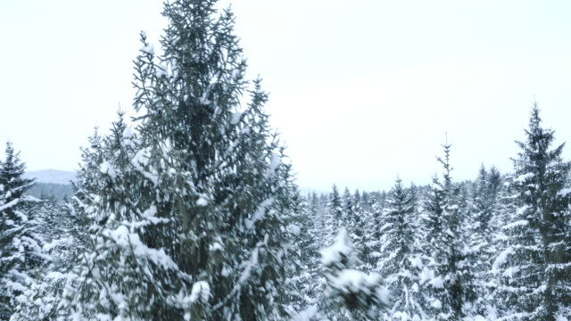 Aerial of a snow covered forest video