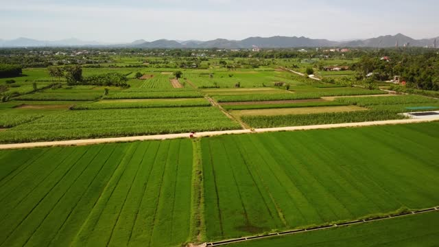 Aerial of agricultural land with green rice fields and sugarcane plantation Aerial of agricultural land with green rice fields and sugarcane plantation. A dirt pathway at farm with traveling motorbikes. Agriculture farm with rural village and mountains in the background. sugar cane stock videos & royalty-free footage