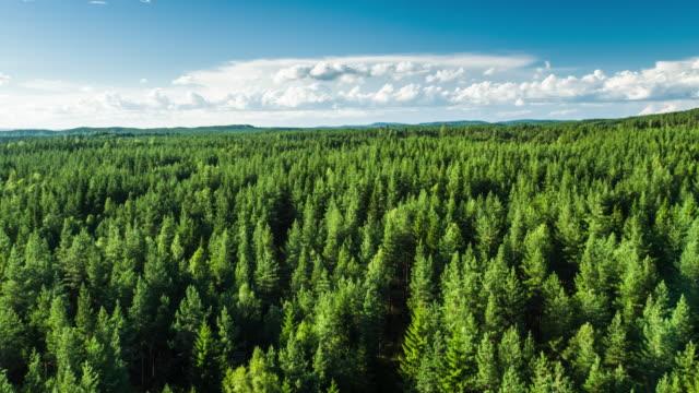 antenn av boreal forest - 4k natur/vilda djur/väder - swedish nature bildbanksvideor och videomaterial från bakom kulisserna