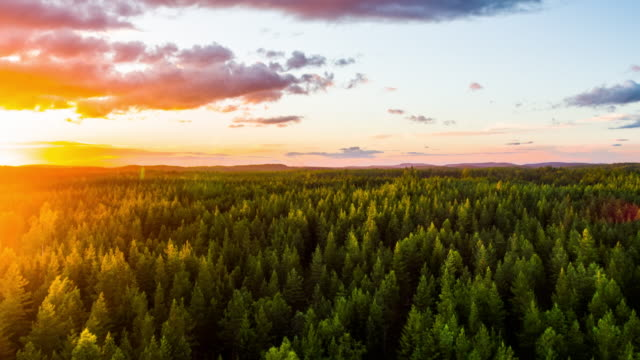 vídeos de stock e filmes b-roll de aerial of boreal forest at sunset - 4k nature/wildlife/weather - conífera