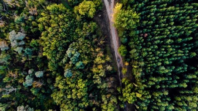 農村景観の美しい緑の森の上を飛んでの 4 k アンテナ - マルチコプター点の映像素材/bロール