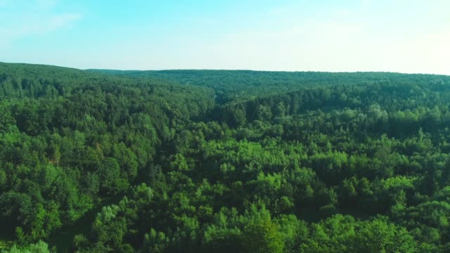 4K aerial of flying over a beautiful green forest in a rural landscape.