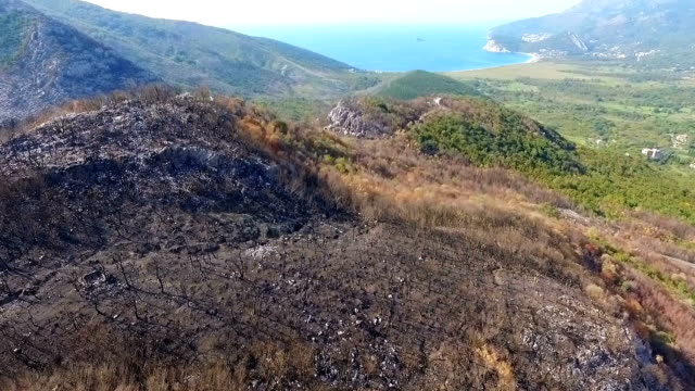 aerial of flying over burned forrests on a mountain side after a large wildfire - incendio video stock e b–roll