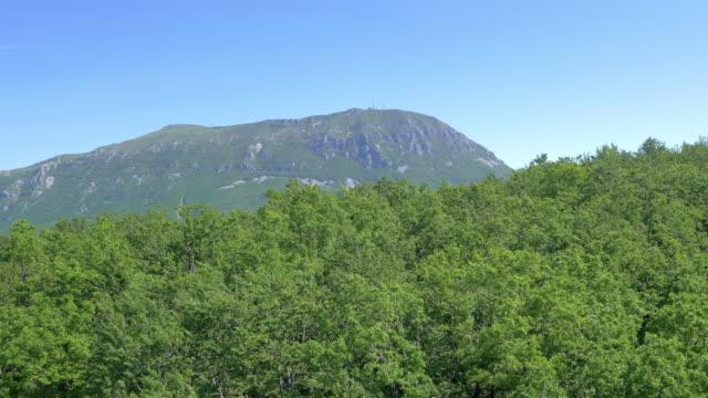 vídeos de stock, filmes e b-roll de vista aérea de florestas de understory para a tenda - plano médio