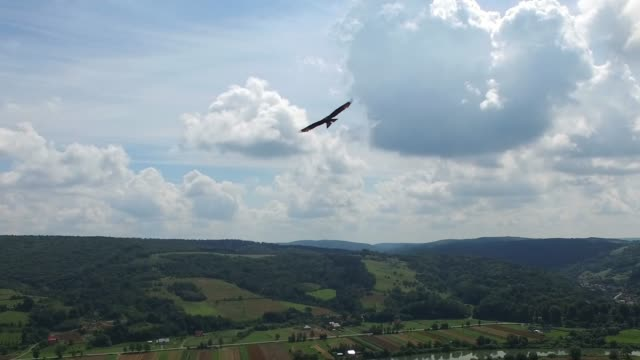 Aerial of Hawk Flying Above Hilly Countryside Forests Aerial of Hawk Flying Above Hilly Countryside Forests falcon bird stock videos & royalty-free footage