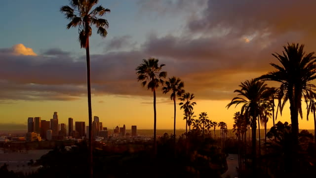 aerial of palm trees and the sunset - los angeles стоковые видео и кадры b-roll