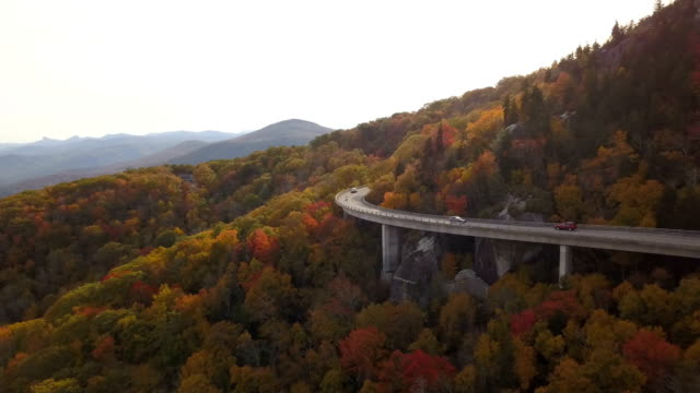 Aerial of road through forest video