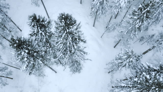 Aerial of snow capped forest trees video