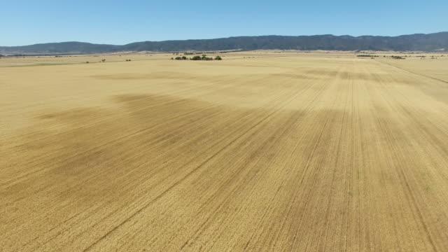 Aerial of wheat farm video