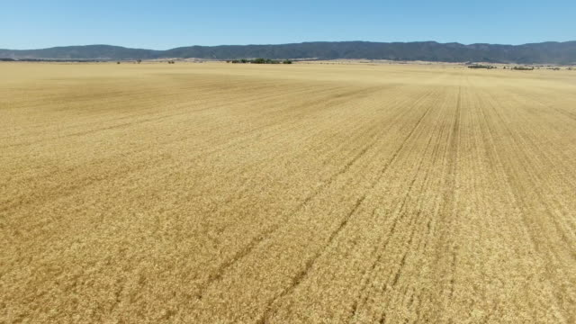 Aerial of wheat farm video