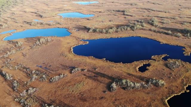 Aerial orbit shot around siberian swamp at sunset