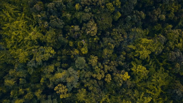 Aerial over a dense tropical forest and hill tops. video
