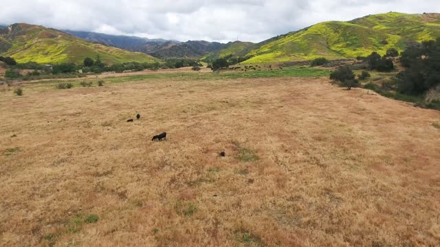 aerial over cattle ranch near Ventura, California