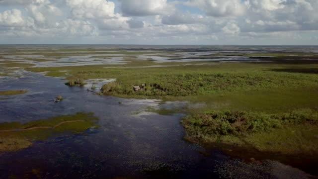 aerial over head shot of the florida everglades - болото стоковые видео и кадры b-roll
