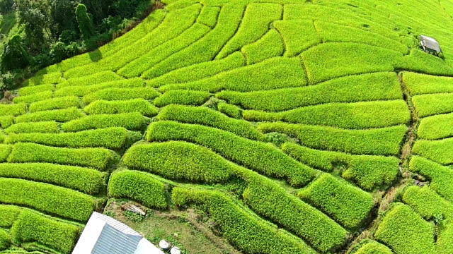 Aerial over terraced rice paddies video