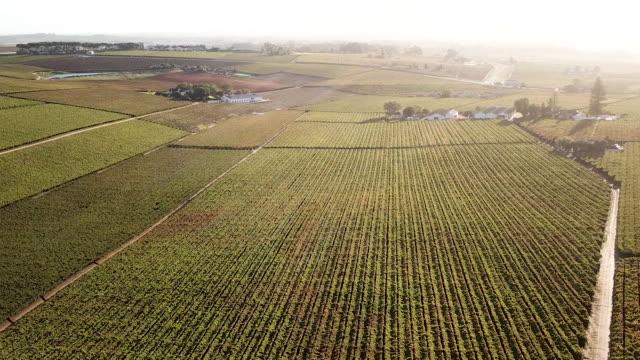 vídeos de stock e filmes b-roll de aerial overhead a vineyard in a valley - wellington