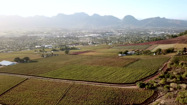 Aerial overhead a vineyard in a valley Aerial of vineyard in a valley with distant mountains western cape province stock videos & royalty-free footage