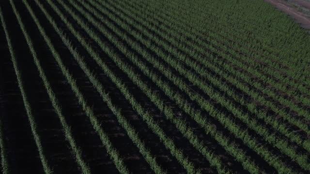 vídeos de stock, filmes e b-roll de aéreo pan de terras agrícolas - região thompson okanagan colúmbia britânica