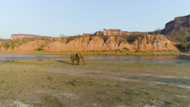 4K aerial panning view of a bull elephant feeding on the banks the Runde river with the red sandstone Chilojo Cliffs in the background, Zimbabwe