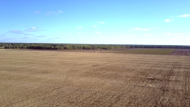 vídeos de stock e filmes b-roll de aerial panorama endless rural field by forest under blue sky - terra cultivada