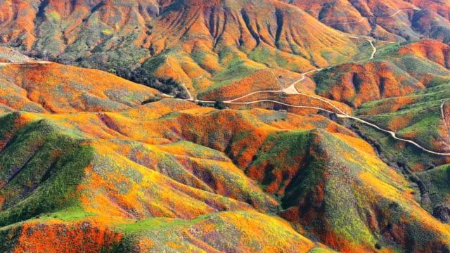 vidéos et rushes de panorama aérien de fleurs de pavot - californie du sud
