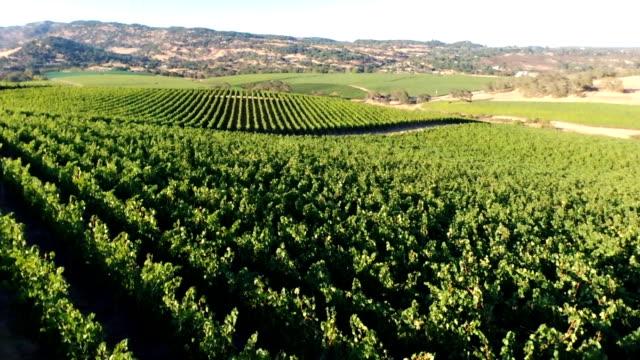 Aerial panorama vineyard video