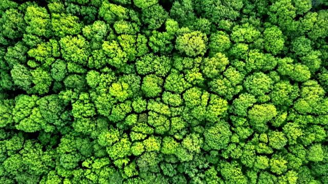 vídeos y material grabado en eventos de stock de video panorámica aérea de zángano en fullhd, a vista de pájaro del bosque con árboles verdes y arbustos. panorámica lenta avance video - árbol