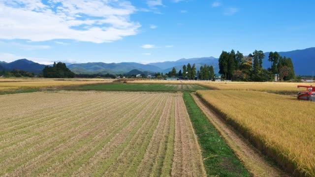 空撮項目農作業米さん収穫稲刈り男性 - 稲点の映像素材/bロール
