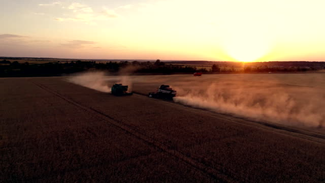 vídeos de stock e filmes b-roll de aerial photography with a drone harvester working in a wheat field at sunset - colheita