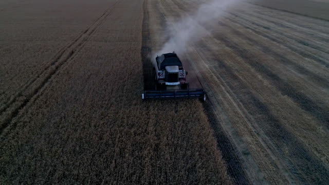 Aerial photography with a drone harvester working in a wheat field at sunset video
