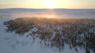 istock aerial, reindeer herd, sunset, dolly In, looking forward, almost tracking the animals 1124325598