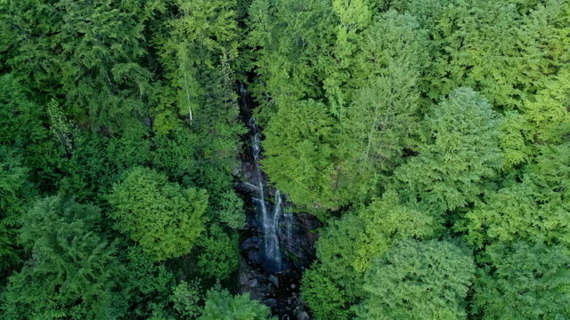 aerial shoot of green forest and waterfall - miroslav mitic stock videos and b-roll footage