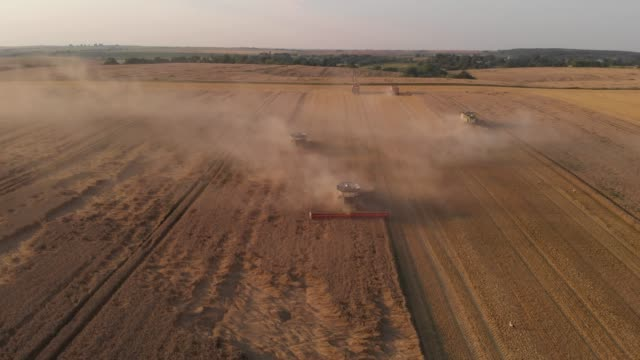 Aerial shot: flying in front of combines harvesting wheat. 4K