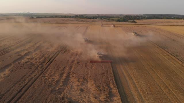 havadan çekim: buğday hasat birleştirir önünde uçan. 4k - çavdar stok videoları ve detay görüntü çekimi