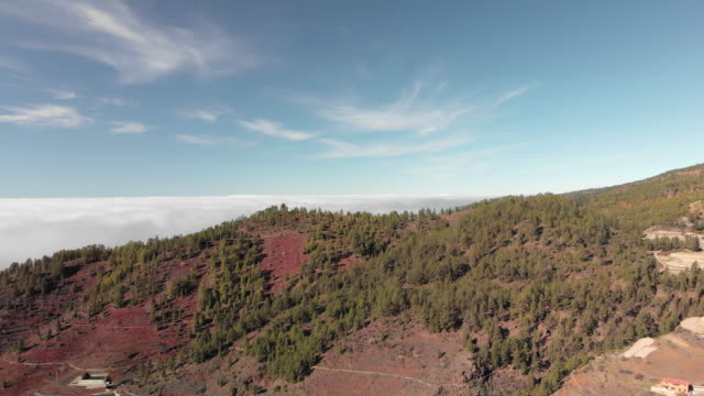 Aerial shot. Flying on a sunny, clear day over volumetric texture thunderstorm clouds. Below forests of green coniferous trees, firs and pines. Tenerife, Canary Islands, Spain