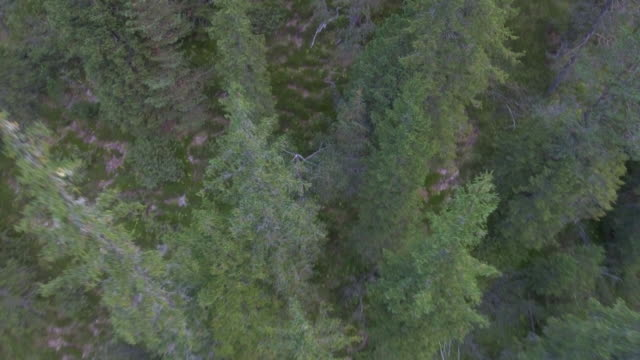 aerial shot flying over a forest - albero caduto video stock e b–roll