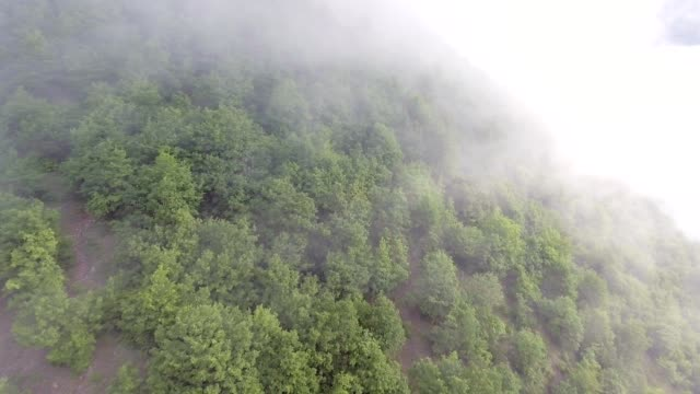 aerial shot. flying over misty forest - nord europeo video stock e b–roll