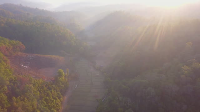 Aerial shot forest in the morning